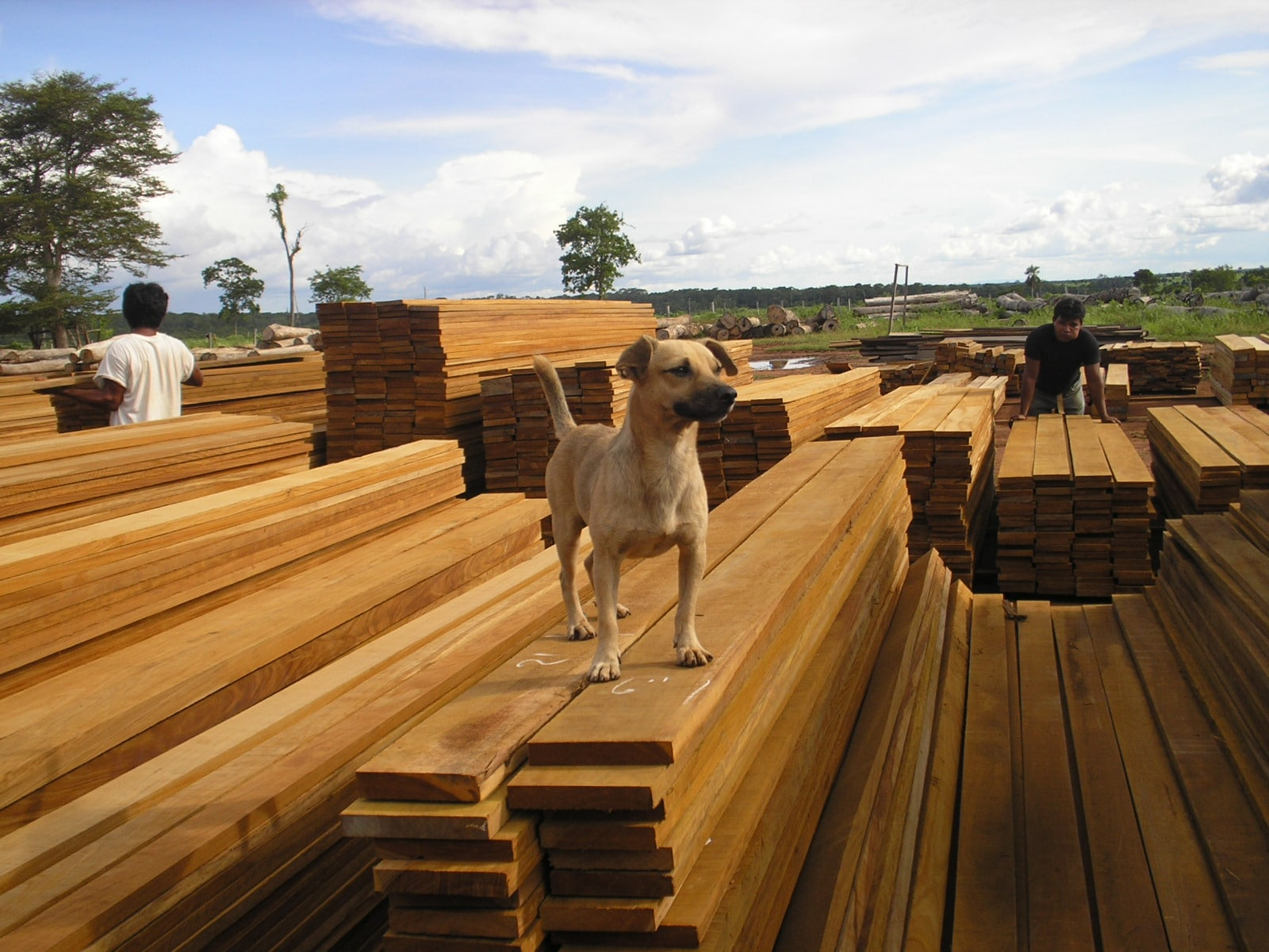 Hardydeck ipe decking in bolivia