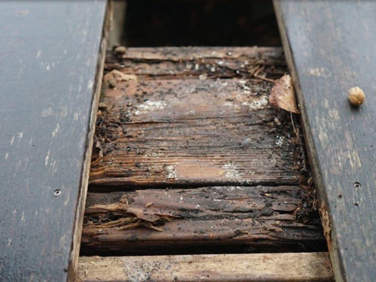 rotten decking inspection